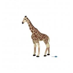 Girafe - Papo