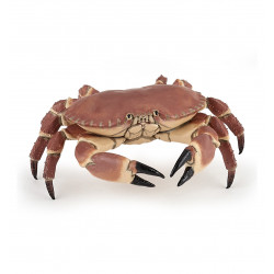 Crabe - Papo